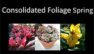 Spring Color and Spring Foliage guide, photo book of 2013 Spring Product line